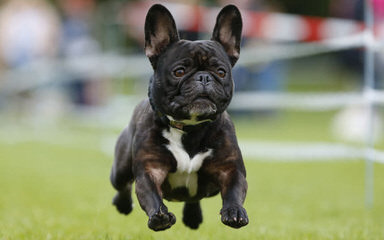 Family pets - Dog Breeders
