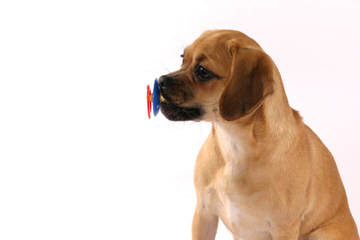 Pushons - Dog Breeders