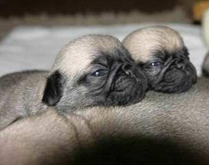 Valespes kennel - Dog Breeders