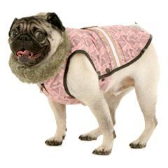 S Bulvara Briosh Pug Kennel - Dog Breeders