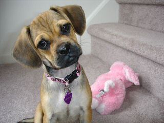 Cuddle Puppies Now Available! - Dog and Puppy Pictures