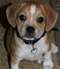 Jim Fork Creek Puppies - Dog Breeders