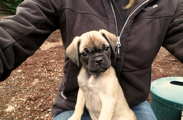 Piney Mountain Puppies - Dog and Puppy Pictures