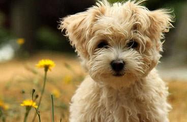 Jl Doodles - Dog Breeders