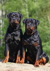 Vom Haus Caliber Kennel - Dog Breeders