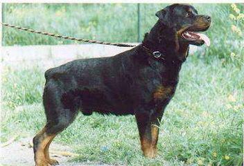 Creighton Debry - Dog Breeders