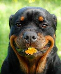 Tricia & Lester Carter - Dog Breeders