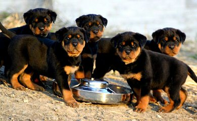 Woofline kennel - Dog Breeders