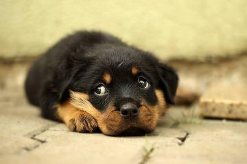 Radio Ranch - Dog Breeders
