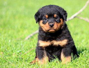 Sean Kennel - Dog Breeders