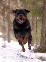 Jeak kennels - Dog Breeders
