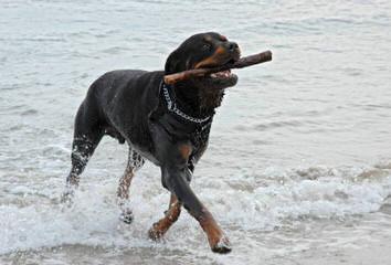 Cragland Kennels - Dog Breeders