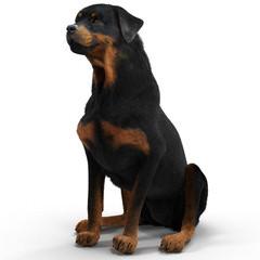 Ol Country Rotties - Dog Breeders