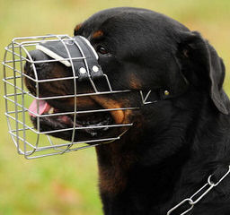 Baltasar Rottweilers - Dog Breeders