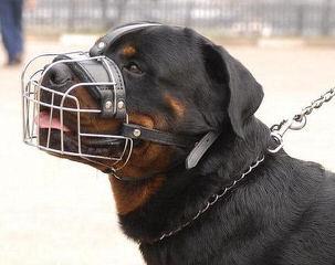 Vom Streitwein Rottweilers - Dog Breeders