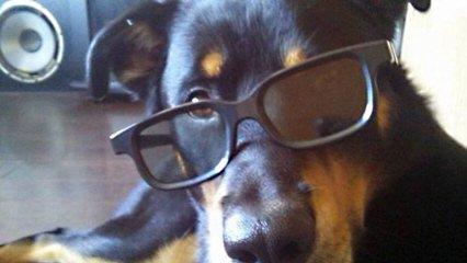 Von Beaverden's German Rottweilers - Dog and Puppy Pictures
