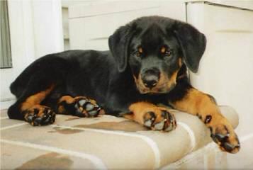 Woofline kennel - Dog Breeders