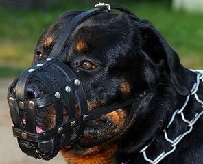 Redyre Rottweilers - Dog Breeders