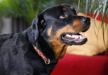 Materville Kennels - Dog Breeders