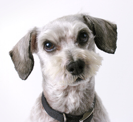 Barmor Kennels - Dog Breeders