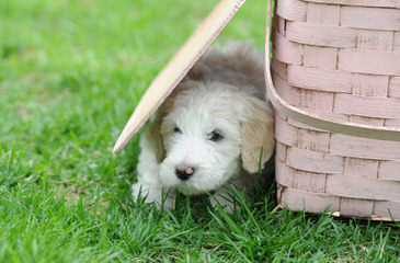 Dog Breeders in California / Puppies For Sale in California