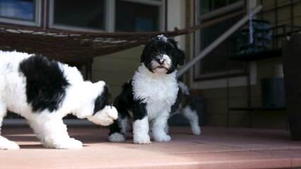 Mom - Dog Breeders
