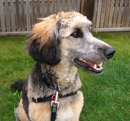 Colorado Blue Sky Kennel - Dog Breeders