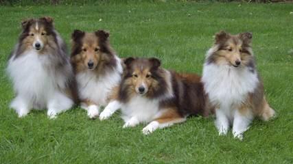 Lucky-Luke Star - Dog Breeders