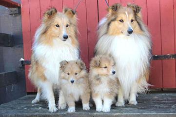 Dustywinds - Dog Breeders