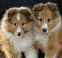 Frisco - Dog Breeders