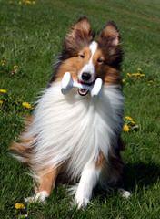 Fox Point Farm - Dog Breeders