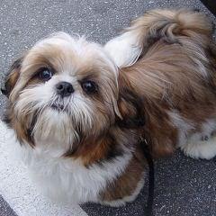 Maple Lane PUps - Dog Breeders