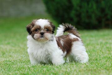 Breeding? - Dog Breeders
