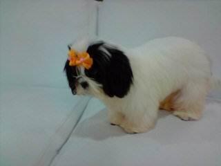 Pamela - Dog Breeders