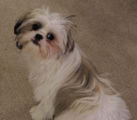 Kerry's puppy Barn - Dog Breeders