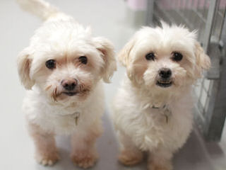 Daisy Dogs - Dog Breeders