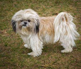 Owens - Dog Breeders