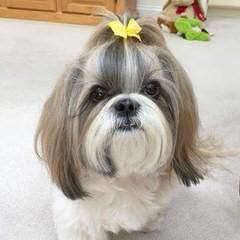 Prosperity Pets - Dog Breeders
