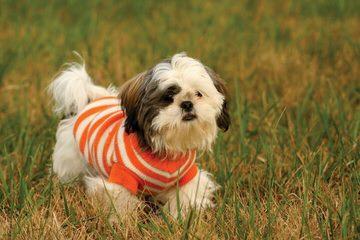 Deb's Tzu - Dog Breeders