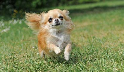 Dixidew Shih Tzu of Georgia - Dog Breeders