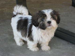 Lady Diggs Kennel - Dog Breeders