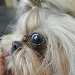 Likkle Paws Jamaica - Dog Breeders