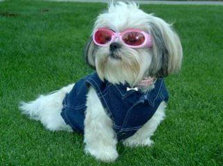 Mystic Mountain Kennels - Dog Breeders