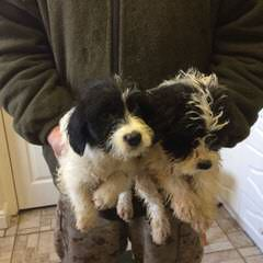 Kerry's puppy Barn - Dog Breeders