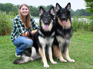Riverwind Shilohs, ISSR - Dog Breeders