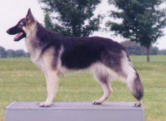 Semper Fi Shilohs Pepper/Carter - Dog Breeders