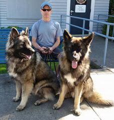 Fireside Shiloh Shepherds - Dog Breeders