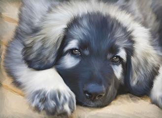 BelleGrace Shilohs - Dog Breeders