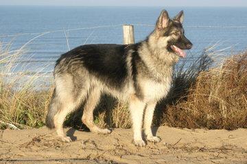 Abba's Shilohs :Bianca/Luke - Dog Breeders