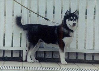 Bear Creek Kennels - Dog Breeders